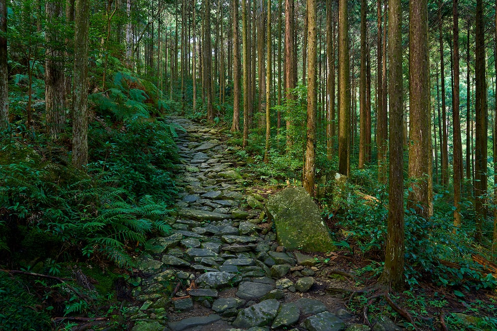 deep-green-forest-with-stone-pavement-alpha-7RII