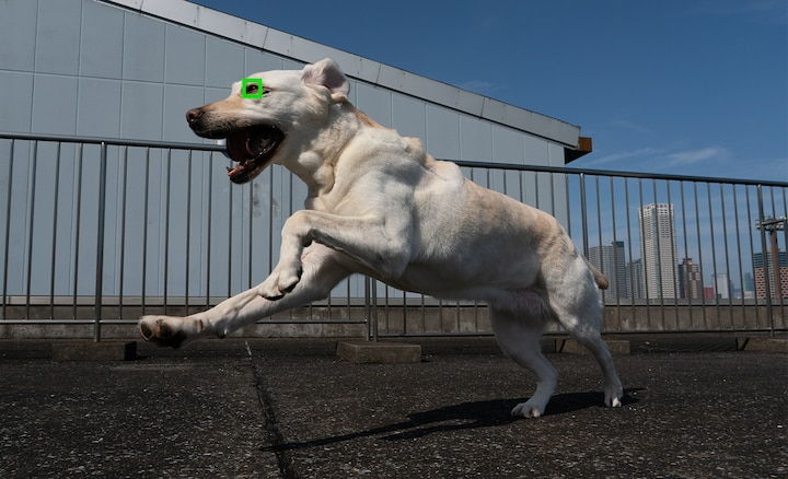 Picture of dog taken using real-time Eye AF