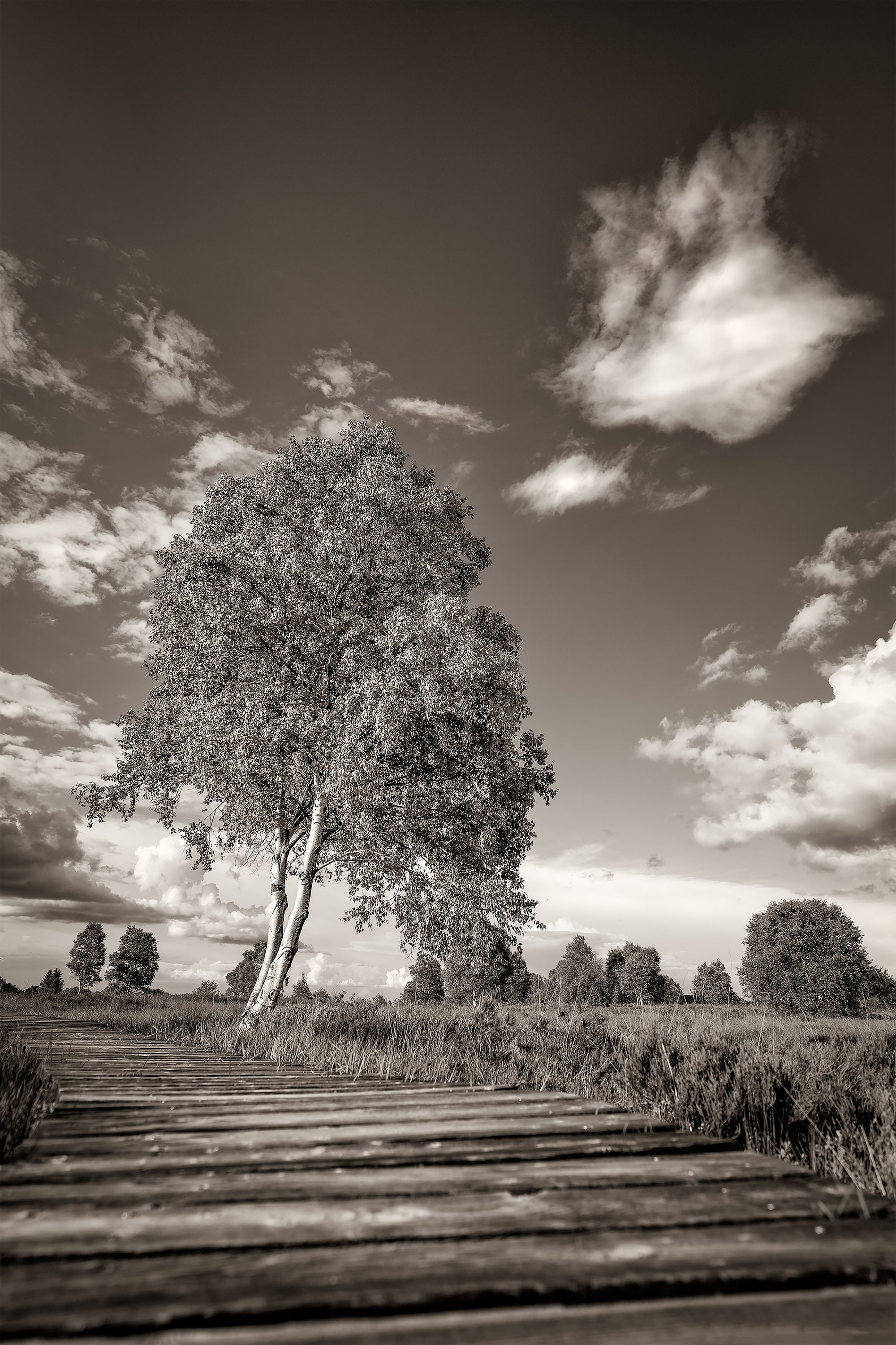 michael schaake sony alpha 7RM4 black and white image of a lone tree against a clean sky with fluffy clouds