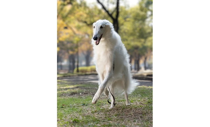 White dog outside with blurred background